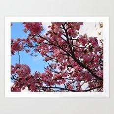 Cherry Blossoms IV Art Print