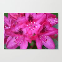 Flowers From Paradise Canvas Print
