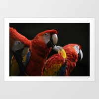 Bird with a Feather Art Print