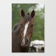 Weather - NNEP Ottawa, ON Canvas Print