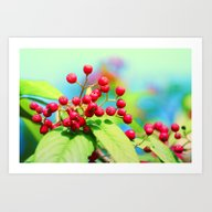 Art Print featuring Red Autumn Berrys by Die Farbenfluesterin