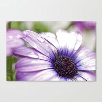 Purple Bliss Canvas Print