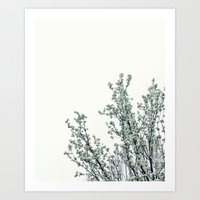 Soft White Art Print