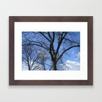 After Winter Trees Framed Art Print