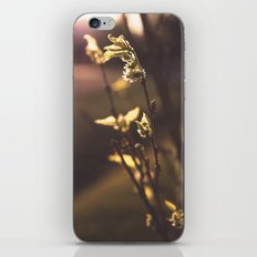 The First Sign of Spring iPhone & iPod Skin