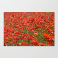Red poppies 1918 Canvas Print