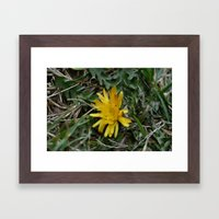 Fine And Dandy Framed Art Print