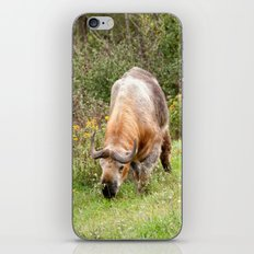 The Endangered Takin iPhone & iPod Skin