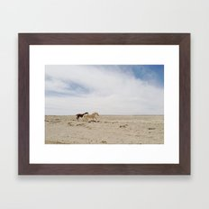 Bloomfield Horse Run Framed Art Print