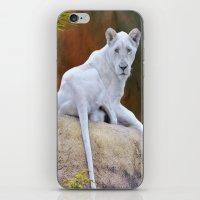 Rare White Lion  iPhone & iPod Skin