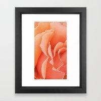 Painted Rose Petal II Framed Art Print