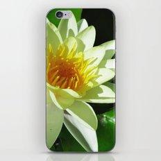 ninfea iPhone & iPod Skin