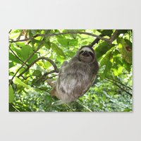Sloths In Nature Canvas Print