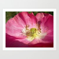 pink bloom focus IX Art Print
