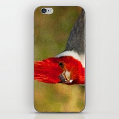 Red-crested Cardinal iPhone & iPod Skin