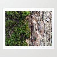 Tree Moos Art Print