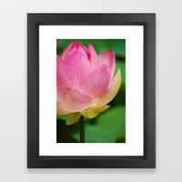 Lotus Blossom Flower 26 Framed Art Print