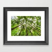 The Ancient Tree Canopy Framed Art Print
