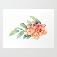 Rowan Berries Art Print