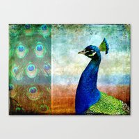 Pretty As A Peacock Canvas Print