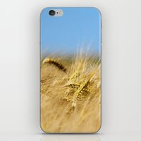 Blue & Gold iPhone & iPod Skin