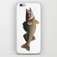 walleye iPhone & iPod Skin