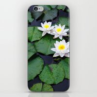 Lilly pad blossom  iPhone & iPod Skin