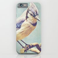 iPhone & iPod Case featuring Virginia Bluejay by Beth Thompson