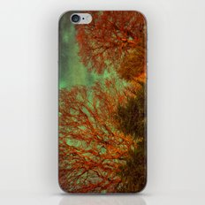 Trees, Trees, Trees iPhone & iPod Skin