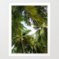 Maldivian palm Art Print