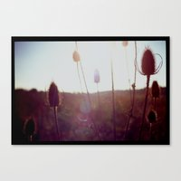 Evening Light In The Fie… Canvas Print