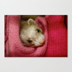 Ferret Canvas Print