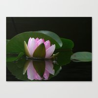 Reflecting Water Lily Canvas Print