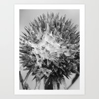 Dead Cone Flower 6 Art Print