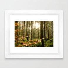 Morning Shines Through Framed Art Print