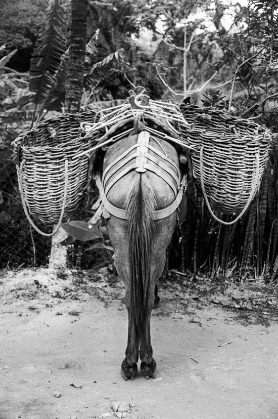 Donkey's Behind Art Print