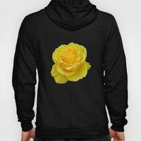 Beautiful Yellow Rose Closeup Isolated on White Hoody