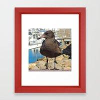 Portrait of a Grumpy Gull Framed Art Print