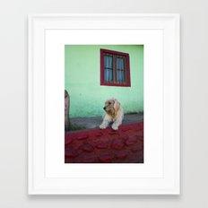 White Dog, Blue House Framed Art Print