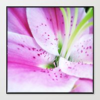 Pink Lilly II Canvas Print
