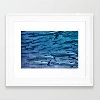 Barracuda! Framed Art Print