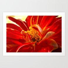 Dahlia 2 Art Print