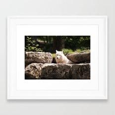 Canis Lupus Arctos Framed Art Print