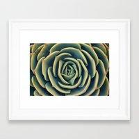 Echeveria X Imbricata Su… Framed Art Print