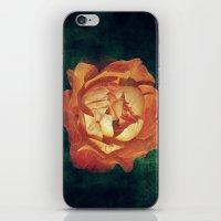 Orange Rose iPhone & iPod Skin
