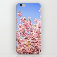 Pink Cherry Blossoms Against Blue Sky iPhone & iPod Skin