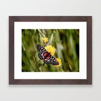 A Red Dotted Checkerspot Framed Art Print