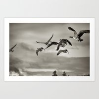 Geese In Flight ,  Finge… Art Print