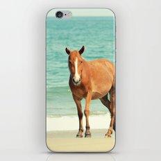 Wild Mustang of Carova, NC iPhone & iPod Skin