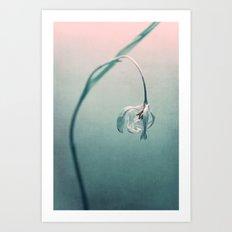 the first tulip Art Print